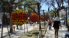 Marochas -  Flower Festival, Festa da Flor, Funchal, Madeira Island, Portugal
