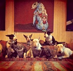 Fede Musqui's Pack Of #Bull #Terriers