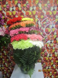 FINEST QUALITY CARNATIONS AT SANTA MARIAS