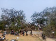 Beringin Raksasa Berusia Ratusan Tahun Di Alun-alun Batang Tumbang Terbelah,