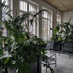 Idées déco du centre culturel l'Eden, petite jungle intérieure pour la verrière Plants, Cultural Center, Plant, Planets