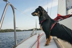 Dog on a Boat.  by Luis Velasco for Stocksy United