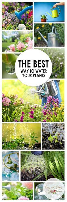 How to Water Your Plants, Gardening, Gardening Hacks, Gardening Easy Ways t. Organic Gardening Tips, Gardening Hacks, Gardening For Beginners, Flower Gardening, Sustainable Gardening, Gardening Tools, Vegetable Garden Tips, Container Gardening Vegetables, Vegetable Ideas