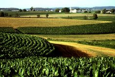 Iowa Corn Fields. Stayed with a farm family as part of a Girl Scout Wider Opportunity in 1974. Corn was served at every meal.