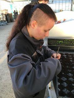 Koulintatikun avulla tehdään multaan reikä, johon taimi istutetaan.