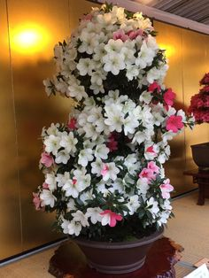 (46) Одноклассники Floral Wreath, Wreaths, Plants, Home Decor, Floral Crown, Decoration Home, Door Wreaths, Room Decor, Deco Mesh Wreaths