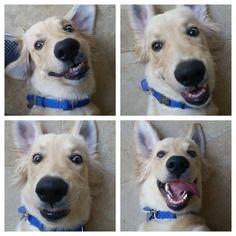 Dog snapshots