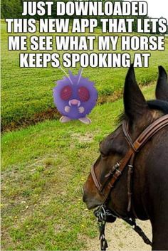 """Just downloaded this new app that lets me see what my horse keeps spooking at."""