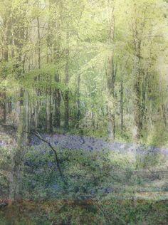 Bluebells collage print.  £6.50