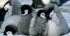 15 Penguins That Are The Reason Cute Exists.