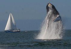 Puerto Vallarta, Mexico:  Whale Watching