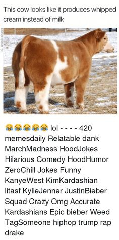 Memes, , and Cow: This cow looks like it produces whipped   cream instead of milk   lol - - - - 420 memesdaily Relatable dank MarchMadness HoodJokes Hilarious Comedy HoodHumor ZeroChill Jokes Funny KanyeWest KimKardashian litasf KylieJenner JustinBieber Squad Crazy Omg Accurate Kardashians Epic bieber Weed TagSomeone hiphop trump rap drake