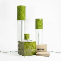 Mossmania Design Set, composed of Mosslight, Cube and Patch. #design #designgreen #moss #lichen #nature