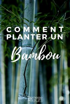 Découvrez comment bien planter un bambou : où, quand et comment installer une barrière anti rhizome. #jardin #jardinage #bambou Comment Planter, Plantation, Image Categories, Horticulture, Gardening Tips, Bamboo, Backyard, Patio, Plants