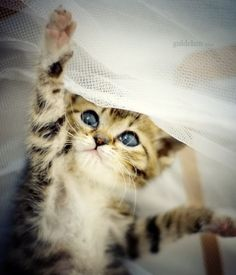 It's Impossible To View These 25 Seriously Cute Pictures Of Kittens Without Smiling | Kitty Bloger