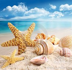 Starfish And Seashells On The Beach Royalty Free Stock Photos ...