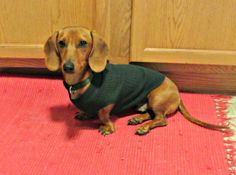 """The description alone is worth the pin: """"This [recycled] sleeve trick is great for Dachshunds, as they're usually too long for normal dog sweaters. Normal dog clothes tend to make them look like little puppy strippers wearing midriff-baring crop tops."""""""