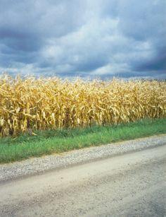 Fall Corn Ontario Canada (which also looks like my home state - Nebraska)