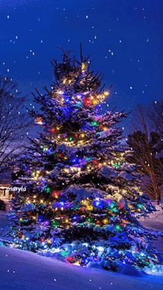 Cool Christmas Gifs To Get You In The Holiday Spirit – The Xerxes – Outdoor Christmas Lights House Decorations Noel Christmas, Christmas Images, Winter Christmas, Animated Christmas Pictures, Animated Christmas Tree, Merry Christmas Wishes, Cabin Christmas, Christmas Is Coming, Christmas Cards