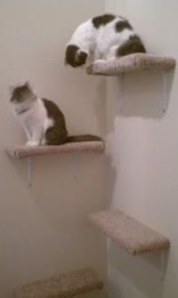 Easy DIY cat shelves. Much cheaper than a cat tree! Our cats love them!