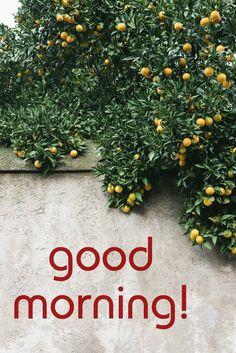 good morning lemon tree