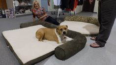 "4/28/14  Awesome dog beds available for purchase at Rikki's Refuge Re-Tail!  Rikki's Refuge Re-Tail "" A Pawsome Resale Shop "" 3503 Lafayette Blvd. Fredericksburg, VA. 22408 540-891-5300 RE-TAIL on Facebook: https://www.facebook.com/ReTail.org"
