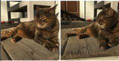 The Art of Cat Ignoring You