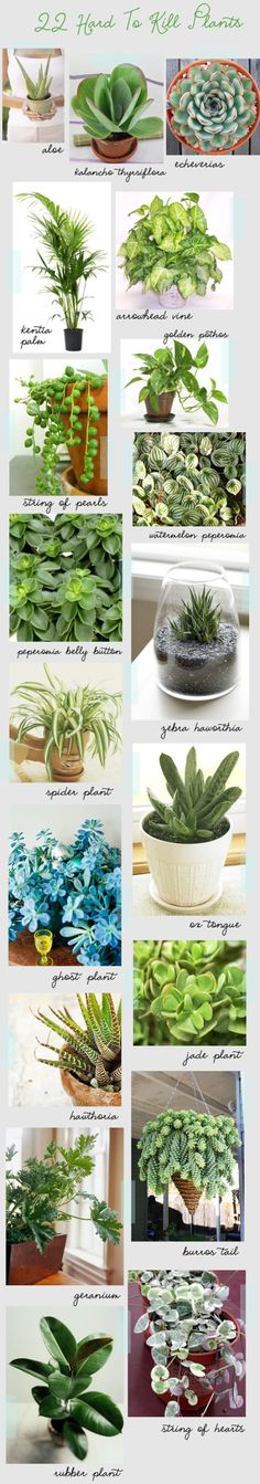 Hard-to-Kill Houseplants: Author and journalist Holly Becker knows how frustrating it is to watch your houseplants wither away. To help fellow gardeners out, she put together a chart that outlines several hard-to-kill plants you can always rely on.