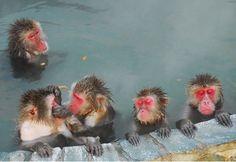 日本北海道猴子泡溫泉 舒服至極昏昏欲睡