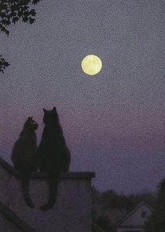 kitty cat love photography art couple cute light beautiful perfect vintage friends inspiration indie dreams moon old animal dark nature travel amazing sweet passion Romantic pale