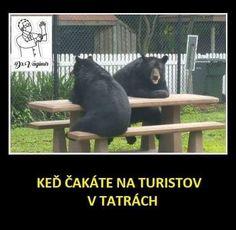 Když čekáte na turisty v Tatrách... Jokes Quotes, Memes, Some Jokes, Black Bear, Haha, Funny, Animals, Animales, Husky Jokes