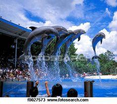 Florida Sea World