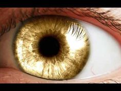 12 Best Subliminal Images On Pinterest Green Eyes Change Your Eye