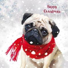 Cute Pug Puppies, Cute Pugs, Funny Cat Jokes, Dog Pictures, Funny Pug Pictures, Pug Christmas, Christmas Paintings On Canvas, Baby Pugs, Akita Dog