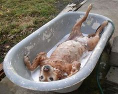 cute funny animal animals taking bath bathing cats dogs cat dog