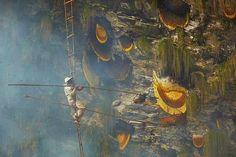 himalayan honey hunters   Honey Hunters   Gurung Tribes Nepal