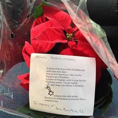 Photo by michelletos14Act 13 of 26 a poinsettia for a lovely elderly couple taking a walk in memory of Anne Marie Murphy #26acts