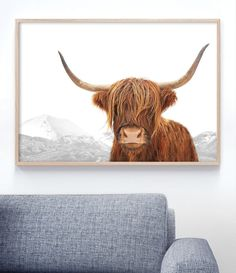 Highland Cow Art Print | Scottish Cow Photography. Wall Art by Little Ink Empire. Click on image to adopt this gorgeous guy! #highlandcowphotography #highlandcowprint #highlandcowart