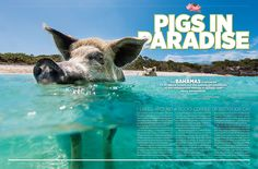 Swimming Pigs in the Bahamas / Magazine: American Way / Photography: Roberto Muñoz; Illustration: Douglas Holgate
