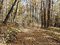 Condrita forest, not far from Chisinau Moldova