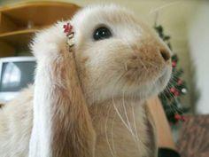 Pretty bunnyPretty b