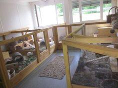 Gehege :: Tierheim Wannigsmühle Münnerstadt Rabbit Farm, Rat Cage, Hamster, Pet Stuff, Guinea Pigs, Rabbits, Animals And Pets, Habitats, Homesteading