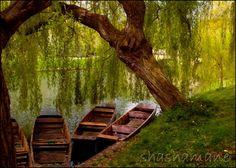 Resting. Cambridge river boat 5x7 art photo print, spring, moored boats…