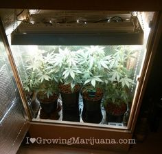 How To Build An Indoor Marijuana Grow Room Check it out for more info https://www.facebook.com/Cannahealth-1639485063014398/