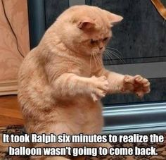 funny cat memes Looking for a laugh? Take a look at these funny cat memes that deal with all sorts of funny topics! Funny Animal Memes, Cute Funny Animals, Funny Cute, Cute Cats, Funny Memes, Funny Pics, Funniest Animals, Funniest Memes, Cat Fun