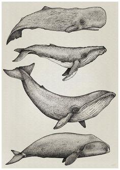 Nathan Miller Whale Print NZ