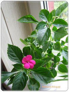 Babcia radzi coś...: Naturalne dokarmianie roślin