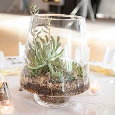 terrarium centrepieces! I could add little figurines to create scenes from favourite movies.