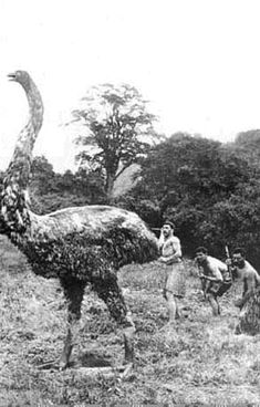Maori mythology and history - origin myths and folklore of the Maori of New Zealand Old Pictures, Old Photos, Madagascar, Maori People, Ancient Persian, Ostriches, Creature Concept Art, Hero's Journey, Cryptozoology