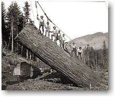 Clark Kinsey and the documentation of  the Pacific NW  Logging Industry